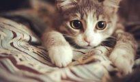 mơ mèo đánh con gì